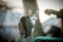 Dorosły kot zostaje na ogrodzeniu zdjęcia stock