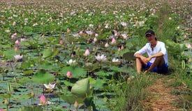 Dorosły mężczyzna siedzi na lotosowym polu, Kambodża Zdjęcia Royalty Free