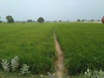 in dorp stock fotografie