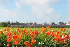 Dorp Den Hoorn in Nederlandse Texel Stock Fotografie