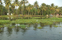Dorp dichtbij binnenwateren, Kumarakom, Kerala, India royalty-vrije stock foto's