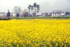Dorp en bloemaanplantingslandschap in Wanfenglin, Guizhou in C stock foto