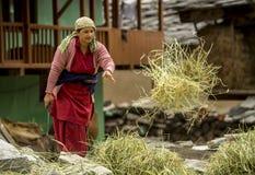 Dorpsbewoner die aan haar landbouwbedrijf werken Royalty-vrije Stock Foto