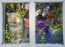 Dorpshuis en een rode kat die op eigenaar wachten Royalty-vrije Stock Foto