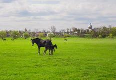 Dorpslandschap met paarden en veulen het weiden Stock Afbeeldingen