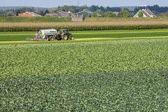 Dorpsmening met Kool gebied en het inspuiten van landbouwer royalty-vrije stock afbeeldingen