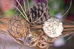Dorre bloeminstallatie met natuurlijke achtergrond royalty-vrije stock foto
