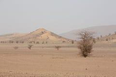 Dorre en hete dag in de woestijn van de Sahara, Tata stock foto