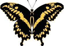 Dorsale Ansicht von Vektor Riese Swallowtail-Schmetterling Papilio Cresphontes Lizenzfreies Stockfoto