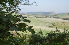 Dorset - de gebieden en de weiden stock foto