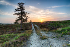 Dorset Heath Royalty Free Stock Photo