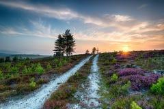 Dorset hed royaltyfri bild