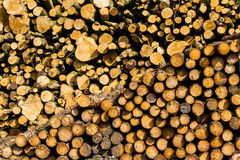 Dorset Logs Stock Photography