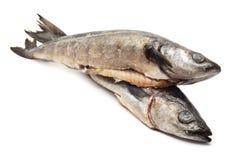 Dorsz ryba fotografia stock