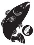 Dorsz ryba Obrazy Stock