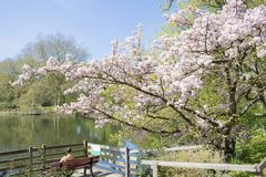 Dortmund Citys Romberg Park lake in North Rhine Westphalia sunny spring time stock photography