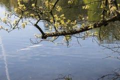 Dortmund Citys Romberg Park lake in North Rhine Westphalia sunny spring time royalty free stock photos