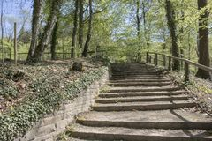 Stairs in famous Romberg Park in Brünninghausen Dortmund. Dortmund, Ruhr Area, North Rhine Westphalia ,Germany: Some Stairs in famous Romberg Park in Brü Royalty Free Stock Images