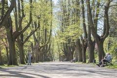 Dortmund, Ruhr teren, Północny Rhine Westphalia Niemcy, Kwiecień, - 16 2018: Romberg park jest częścią Europejska Ogrodowa sieć obraz stock