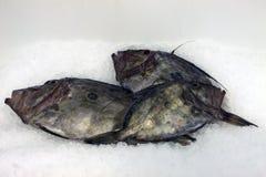 Dory de Juan de los pescados Fotografía de archivo libre de regalías
