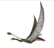 Dorygnathus飞行恐龙照片拟真的表示法,边 图库摄影