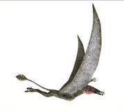 Dorygnathus het vliegen Dinosaurus photorealistic vertegenwoordiging, kant Stock Fotografie
