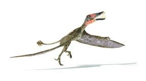 Dorygnathus het vliegen neemt de Dinosaurus photorealistic vertegenwoordiging, Royalty-vrije Stock Afbeelding