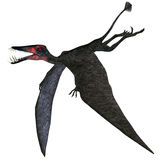 Dorygnathus Pterosaur on White. Dorygnathus was a genus of pterosaur that lived in Europe, Germany in the Jurassic Period Royalty Free Stock Image
