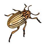 Doryphore, un insecte coleopterous Le Colorado, une icône simple d'insecte néfaste en stock de symbole de vecteur de style de ban Images libres de droits