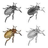 Doryphore, un insecte coleopterous Le Colorado, une icône simple d'insecte néfaste en stock de symbole de vecteur de style de ban Photos libres de droits