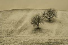 Dos árboles Imagen de archivo libre de regalías
