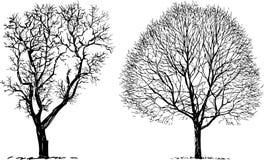Dos árboles Imagen de archivo