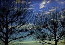 Dos árboles Foto de archivo libre de regalías