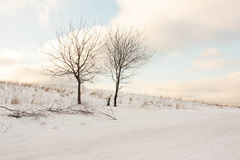 Dos árboles acercan al camino en invierno Foto de archivo
