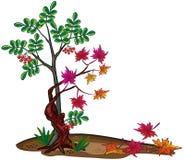 Dos árboles, caída de la hoja. libre illustration