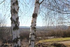 Dos árboles de abedul Foto de archivo libre de regalías