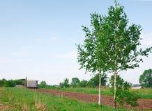 Dos árboles de abedul cerca de la paleta Foto de archivo
