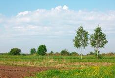 Dos árboles de abedul cerca de la paleta Fotos de archivo