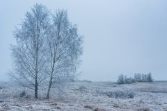 Dos árboles de abedul en un paisaje congelado Imagen de archivo libre de regalías