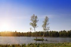 Dos árboles de abedul están creciendo en una pequeña isla en el medio del lago del bosque Gatchina, St Petersburg, Rusia Fotos de archivo