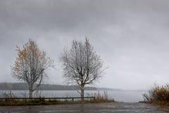 Dos árboles de abedul por el lago Foto de archivo