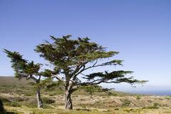 Dos árboles de la señal en la punta del cabo Fotografía de archivo libre de regalías