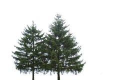 Dos árboles de navidad Fotos de archivo libres de regalías