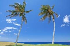 Dos árboles de palmas en la playa imagen de archivo