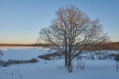 Dos árboles de roble Fotos de archivo libres de regalías
