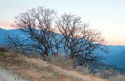 Dos árboles desnudos en la puesta del sol en Hooper Hill sobre el lago Isabel en las montañas meridionales de Sierra Nevada en Ca imágenes de archivo libres de regalías