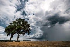 Dos árboles en campos delante de la nube tempestuosa oscura fotografía de archivo libre de regalías