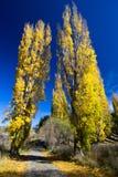 Dos árboles en colores del otoño/de la caída al lado de la trayectoria de la naturaleza Fotografía de archivo