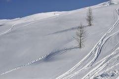 Dos árboles en cuesta nevosa Imágenes de archivo libres de regalías