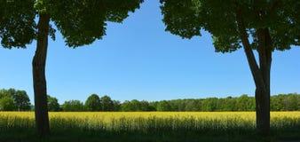 Dos árboles en el campo Imagen de archivo